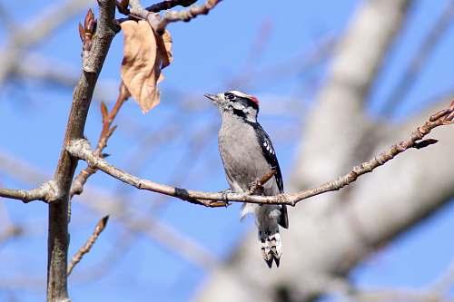 bird bird on tree branch robin