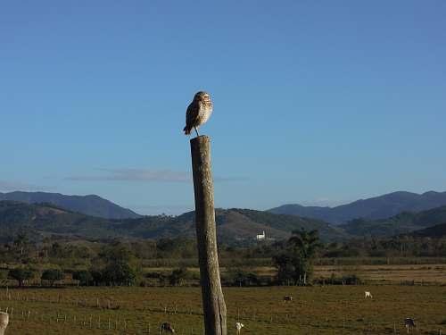 bird bird on tree during daytime accipiter
