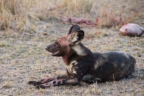 mammal black and brown short-coated animal close-up photography kangaroo