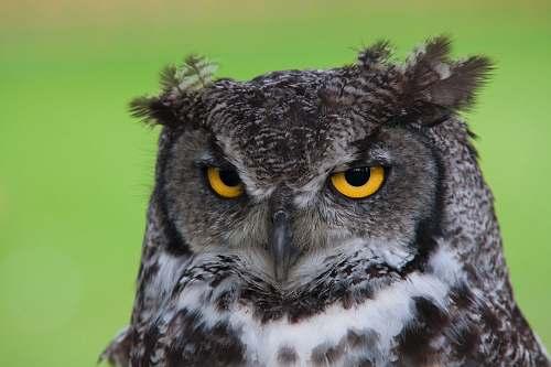 bird black and white owl plush toy beak