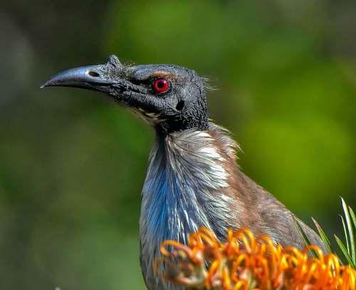 bird black bird vulture