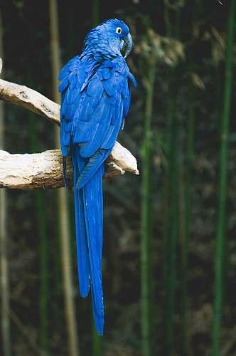 bird blue bird perch on brown tree parrot