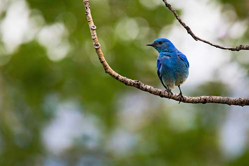 photo bird blue bird standing on tree stem at daytime bluebird free for commercial use images