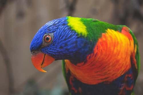 bird blue, green, and orange bird beak