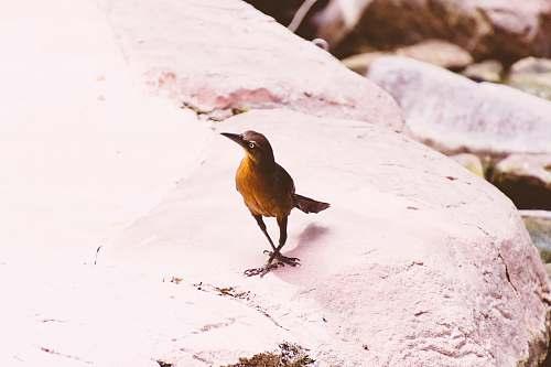 bird brown bird finch