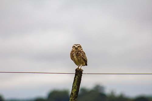 bird brown bird on wood log owl