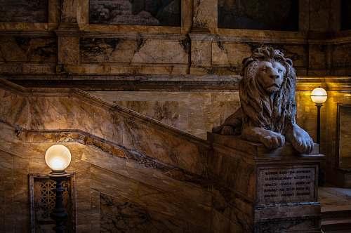 wildlife brown concrete lion statue lion