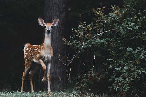 wildlife brown deer beside plants deer