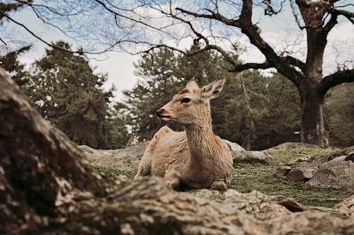 mammal brown deer during daytime kangaroo