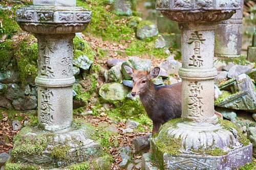 mammal brown deer standing beside concrete column kangaroo