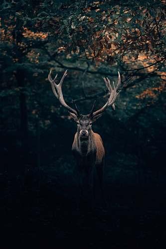 deer brown deer under tree elk