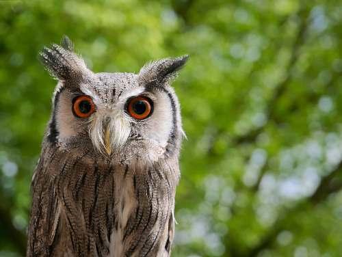 bird brown owl in shallow focus shot owl