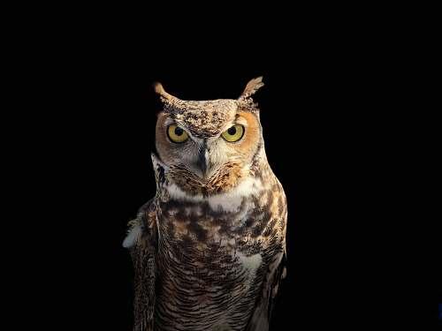 bird brown owl on a dark place owl