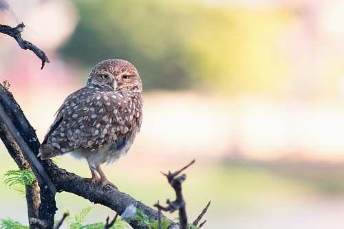 bird brown owl on tree branch owl