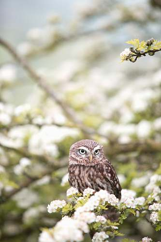 bird brown owl on tree branch in shallow focus photography owl