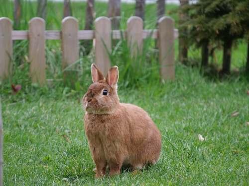 mammal brown rabbit at the garden kangaroo
