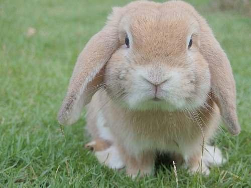 rabbit brown rabbit bunny