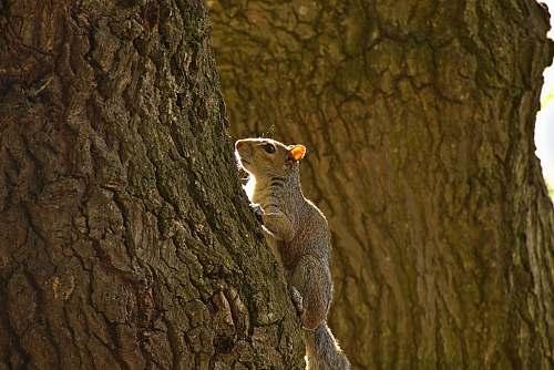 kangaroo brown squirrel on tree log wallaby