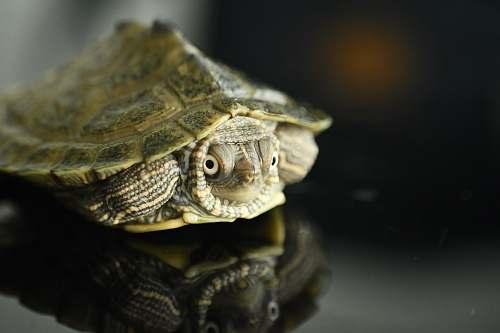 reptile brown turtle sea life
