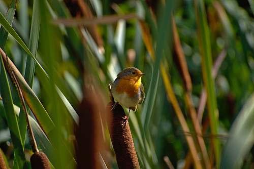 bird close view of European robin london