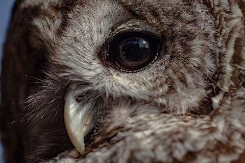 bird closeup photo of brown owl beak