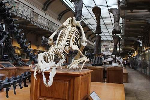 reptile dinosaur skeleton display in a room dinosaur