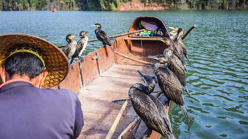bird ducks perching on boat waterfowl