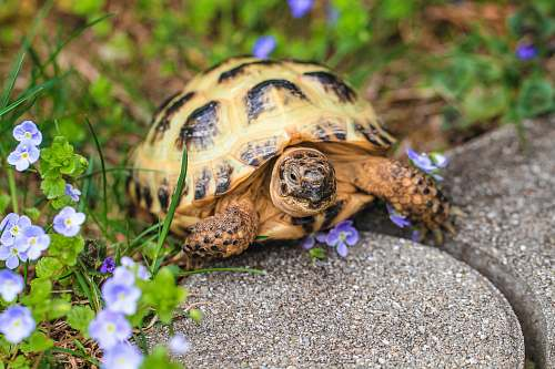 reptile eastern box turtle sea life