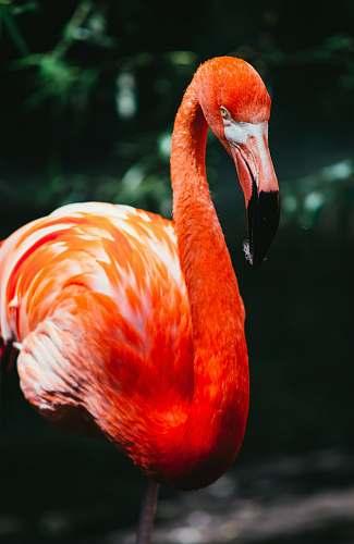 bird flamingo in macro shot photography flamingo