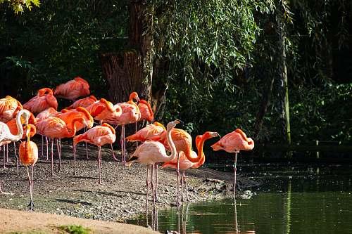bird flock of flamingos pelican