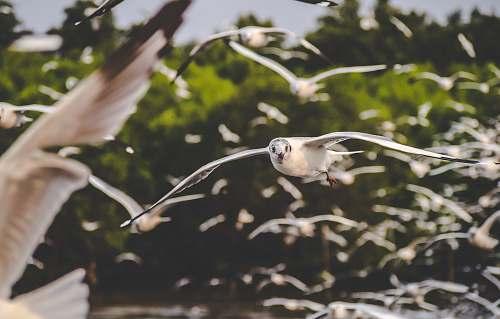 bird flying birds flying