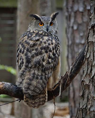 bird gray and black owl on tree branch during daytime owl