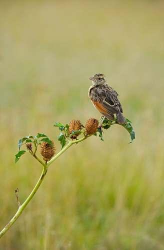 bird gray bird sparrow