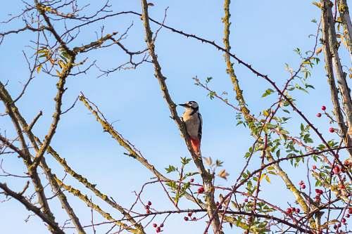 bird gray bird on tree jay