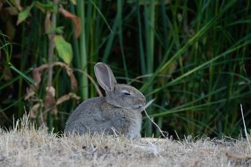 mammal gray bunny sitting on dried grass kangaroo