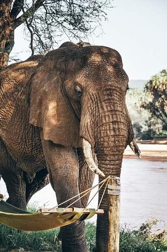 wildlife gray elephant standing beside swing pole during daytime elephant