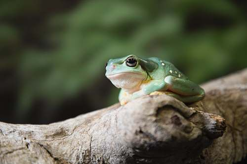 lizard gray toad on brown tree reptile