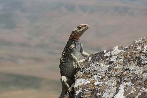 reptile green and white lizard under white sky lizard