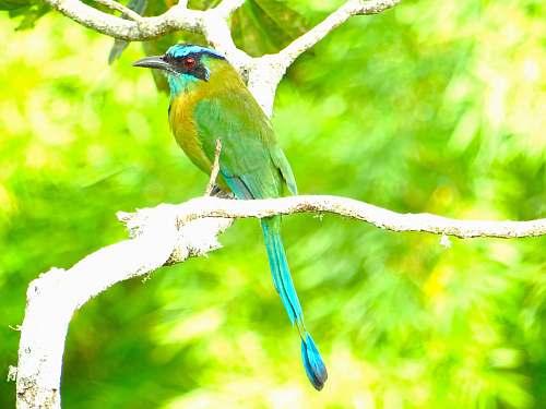 bird green and yellow parakeet bee eater