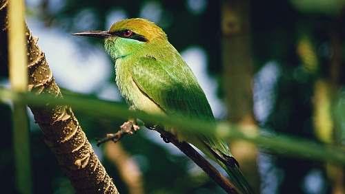 bird green bee-eater bird bee eater