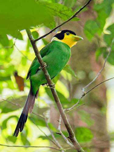 photo bird green bird perching on tree bee eater free for commercial use images