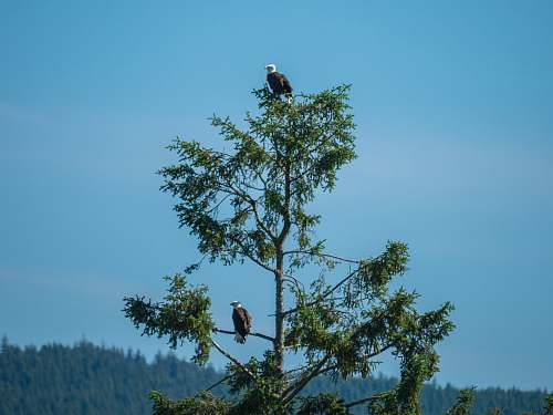 bird green tree eagle
