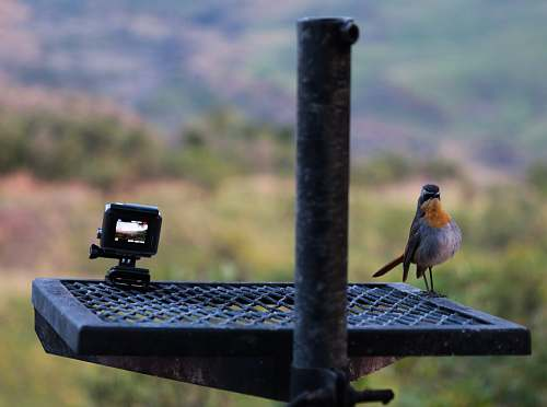 bird grey and orange bird on grey metal frame finch