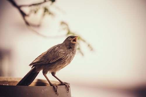 bird grey bird on frame during daytime anthus