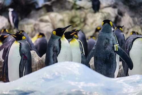 bird group of penguins penguin