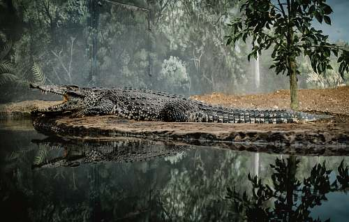 reptile landscape photography of lake surrounded by green leafed trees crocodile