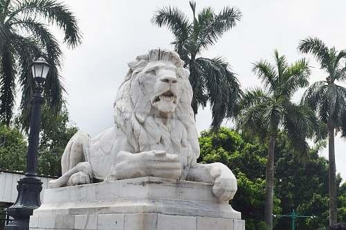 mammal lion statue lion