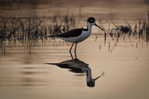 bird long beak bird on body of water nature