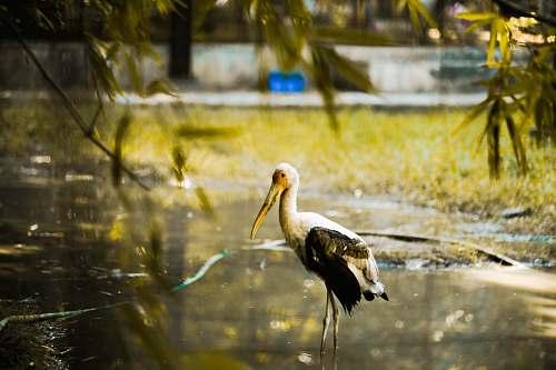 bird long-beaked bird on lake land
