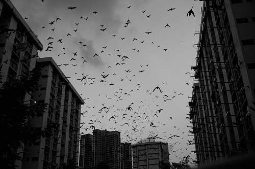 black-and-white low angle photo of flock of birds flock
